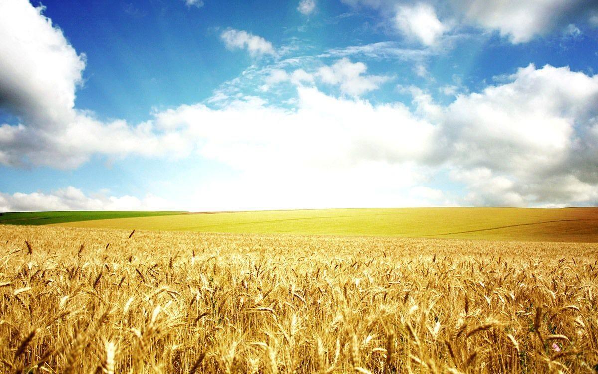 переработка пшеницы в муку схема